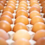 eggs-5455962_1920